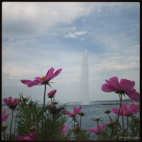 Cosmos and Fountain