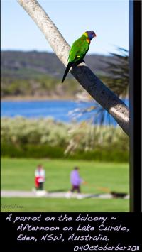 window56-parrot