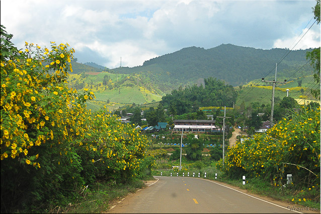 Road into Mae Hong Son hills with sunflowers