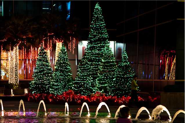 Night landscape: Green Christmas trees with white lights