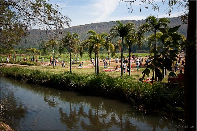 Landscape: Canal, palms, Installation Art