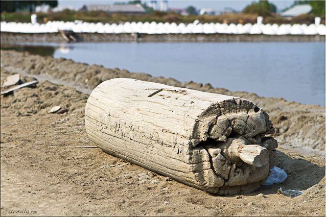 Large wooden roller at the salt pans, Samut Sakorn