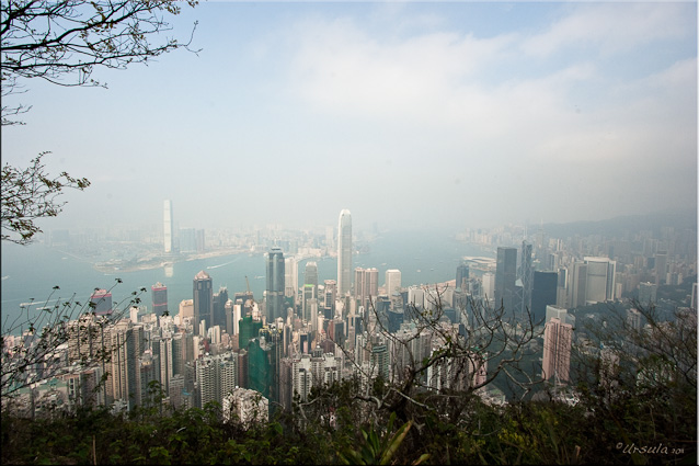 Wide-angle Landscape: Midlevel High-rises from The Peak, Hong Kong