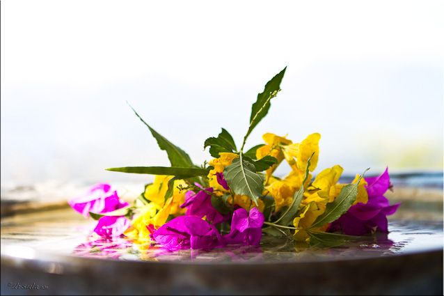 Yellow flowers and pink bougainvillaea in water in a ceramic dish by Peter Rushworth