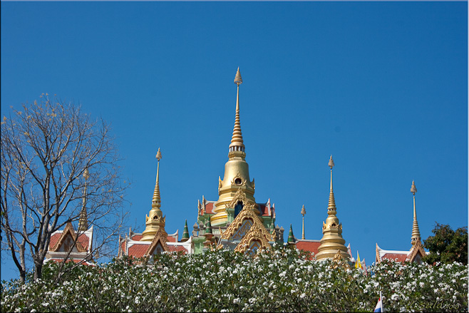 Golden Spires above frangipani blossoms: Wat Thang Sai, Bangsaphan