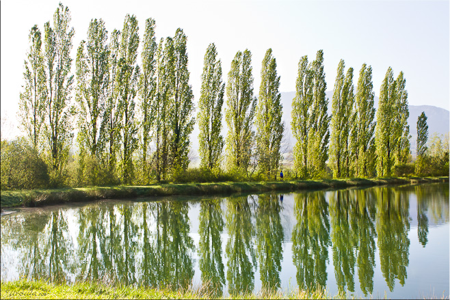 Tall spring-green poplar trees along a straight path and reflected in the lake waters, Puivert, France