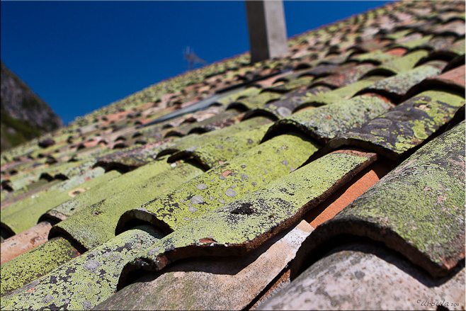 Moss and lichen growing on rounded terracotta roof tiles