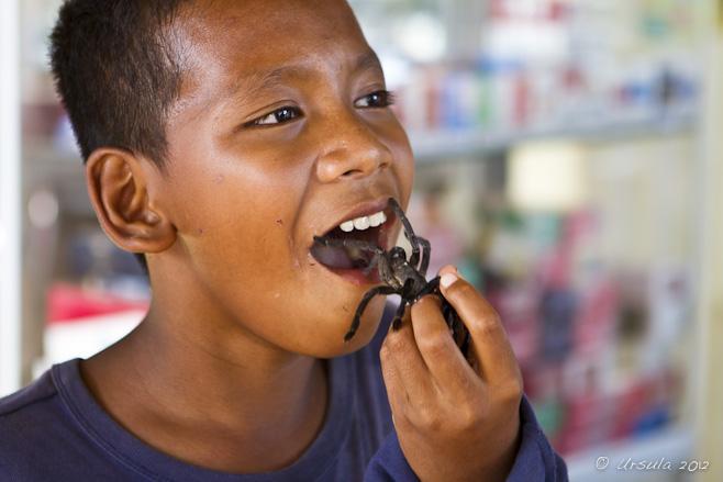 Portrait: khmer boy eating a tarantula