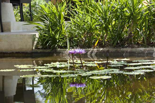 Two lilies and their reflections in a quiet pool.