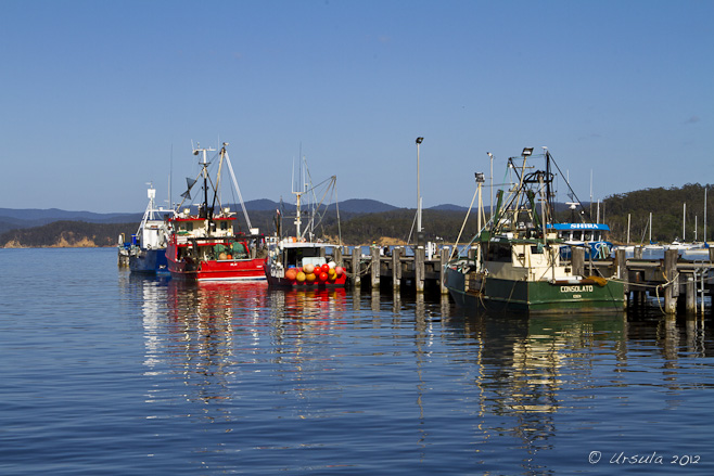 Colourful Fishing Boats tied to a dock; Snug Cove, Eden