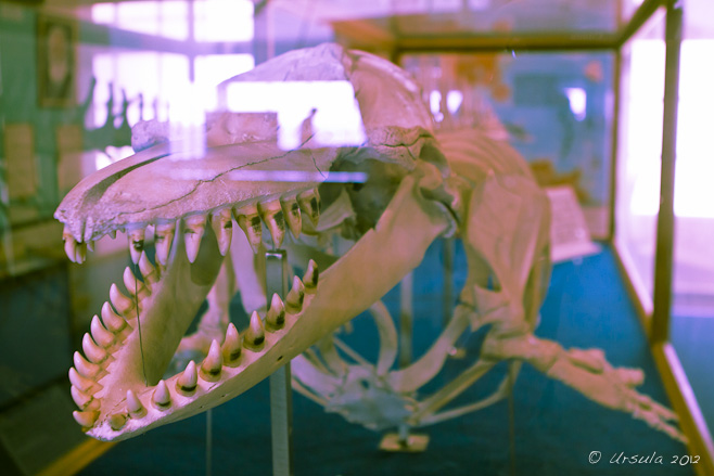Almost Abstract: Skeleton of a killer whale in a reflective case; split-tone colours