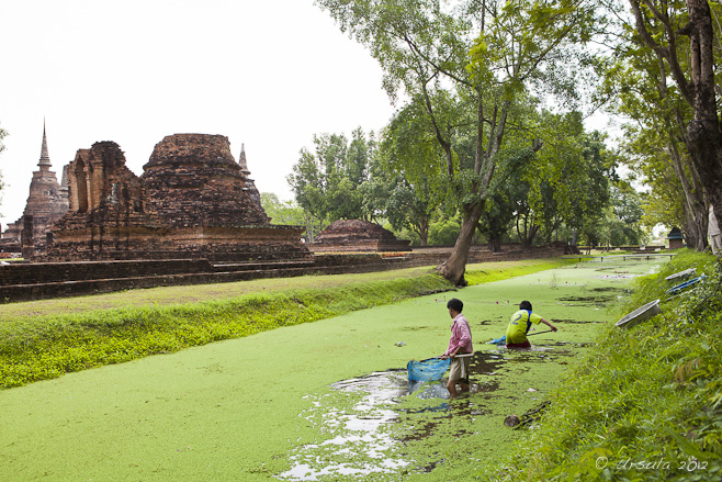 Men with nets standing in a moat covered in green algae.