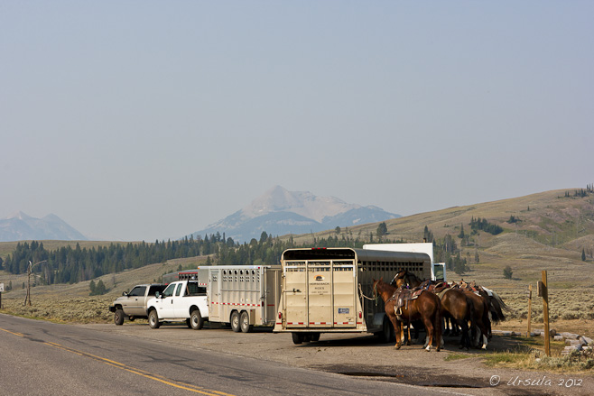 Horses, horse wagons and farm utility vehicles at the side of the road: Yellowstone Plateau