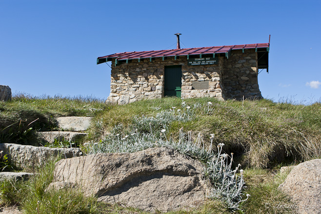 Stone mountain hut against a blue sky, fronted by Silver Snow Daisy, Seaman