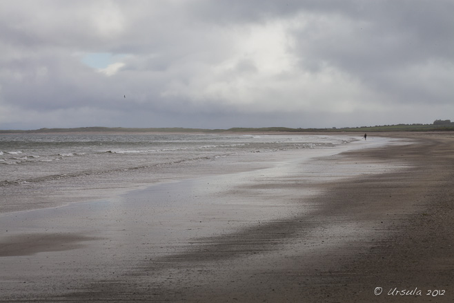 Landscape: expanse of wet beach under an overcast, cloudy sky. Castlegregory Beach, Dingle Peninsula, Ireland