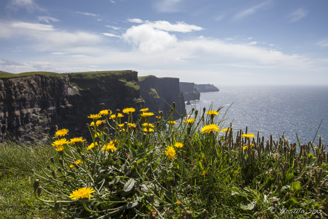Landscape: Foreground, sunny dandelions; background, cliffs of moher under a blue sky.
