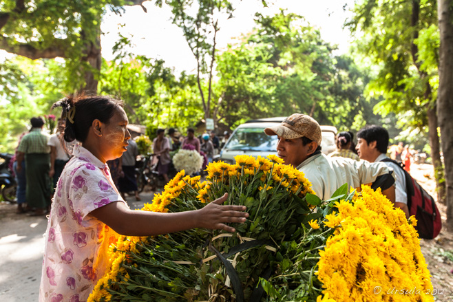 Street scene: a burmese woman with a load of yellow chrysanthemums, Pyin Oo Lwin, Myanmar