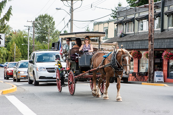 Horse Transport From Vancouver Island