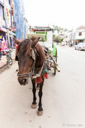 Pony and Cart in the dusty main street, Pyin Oo Lwin