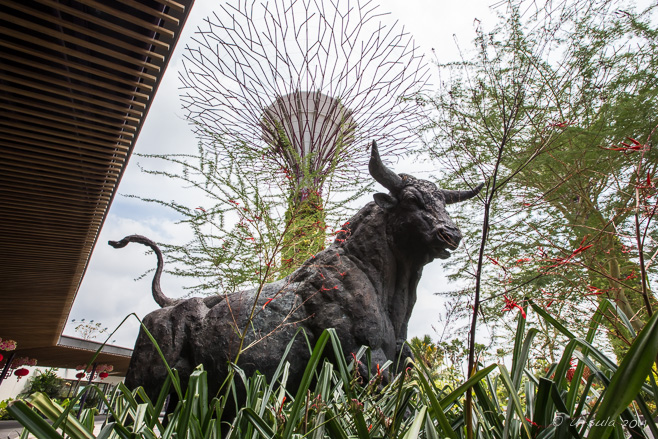 Bronze sculpture: Magnificent Bull , Singapore Gardens by the Bay
