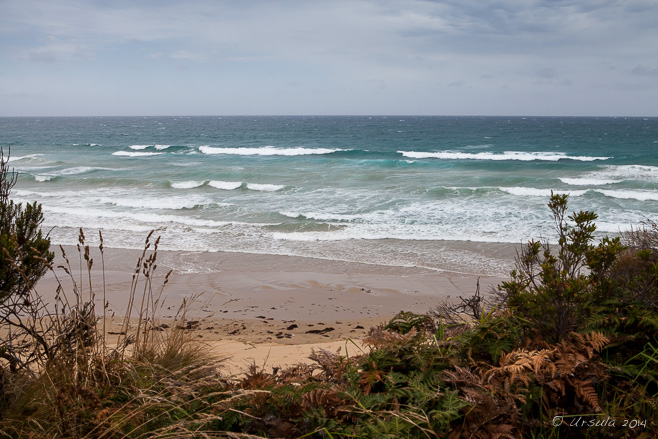Grasses in the foreground, sandy beach and waves on the Southern Ocean, Bell