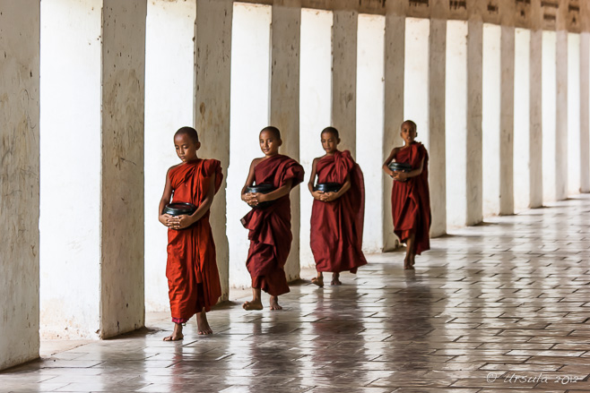 Four Burmese Novices with their begging bowls, south entrance causeway, Shwezigon Pagoda