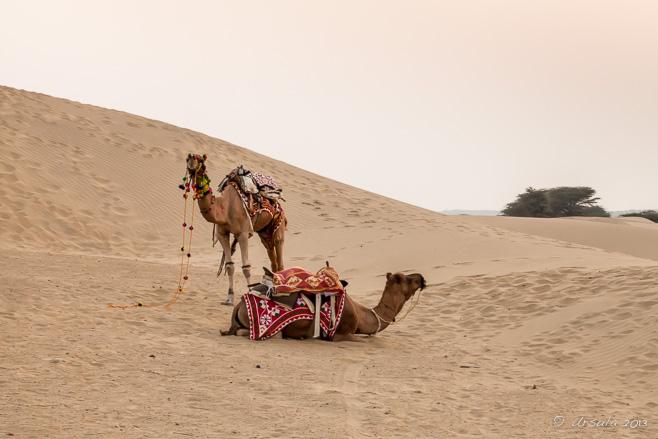 thar desert people - 658×439