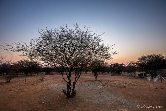 Sunrise over Namibian bushland, Kamanjab