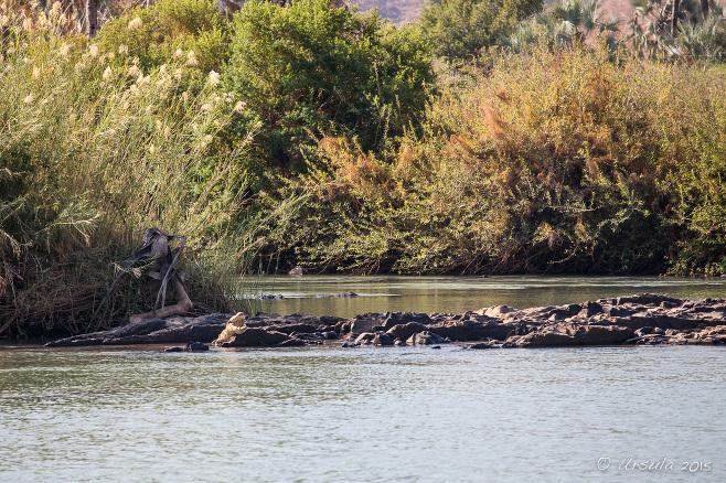 Landscape: Crocodile on the Kunene River