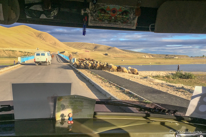 View through a UAZ windscreen: Sheep on a Mongolian Roadway