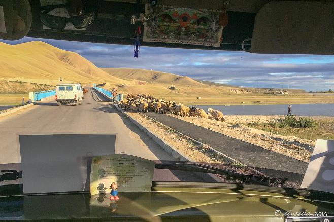 View through a UAZ windscreen: Sheep on a Mongolian Roadway