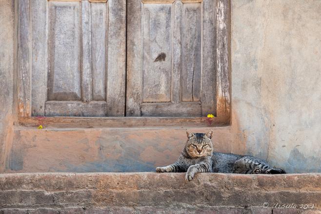 Cat on a step, Panauti-Namobuddha Rd, Nepal